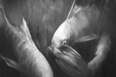 2_Vissen