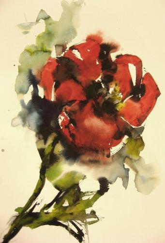 Klaprozen II aquarel en inkt 100x70cm prijs op aanvraag